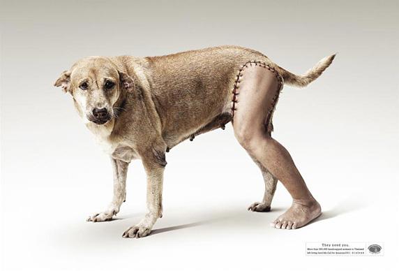 Fotomontaje: Perro con pierna de hombre