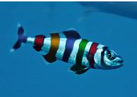 Posicionamiento SEO. El pez piloto